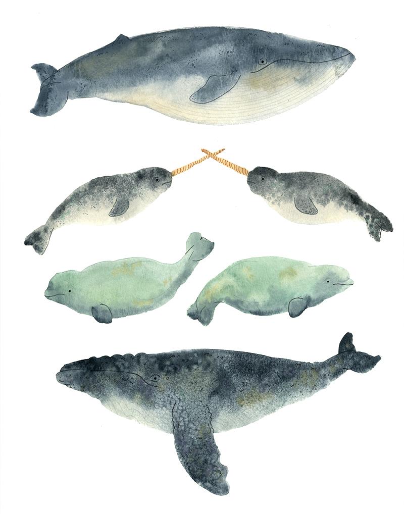 Uncategorized Whale Pictures To Print whale sandwich print